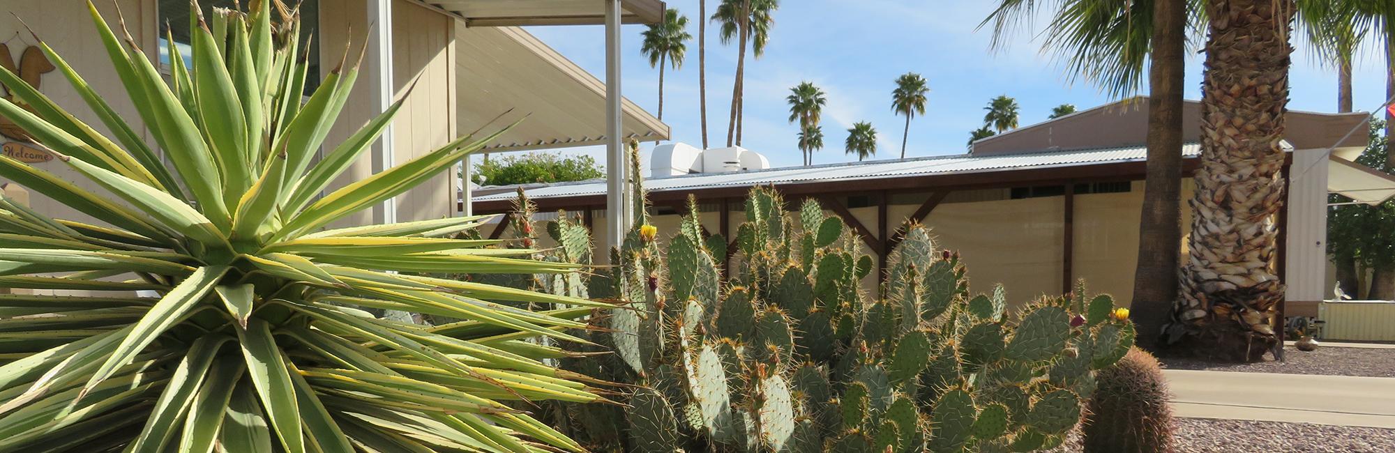 Arizona 55+ Gated Community